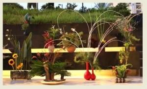 טנבטה סידור פרחים